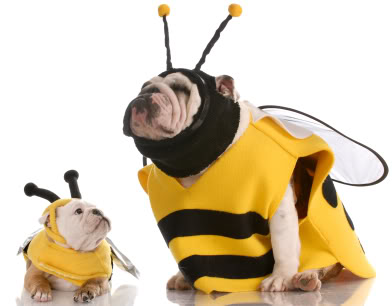 Silly Bees